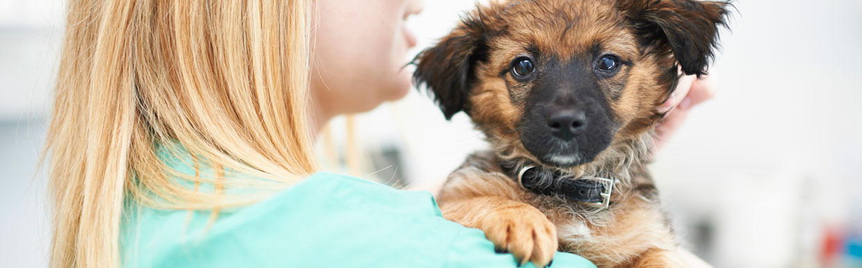 Celebrate Veterinary Nursing Awareness Month with us!